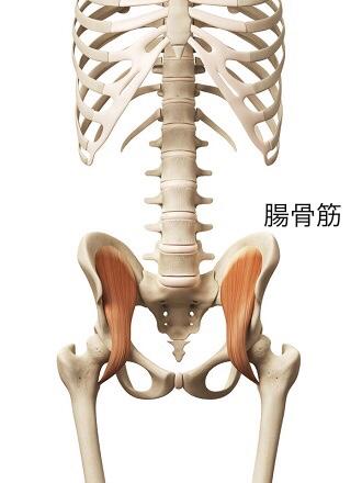 大腰筋 腸骨筋
