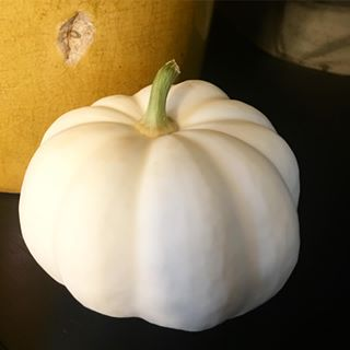 mini pumpkin singlular