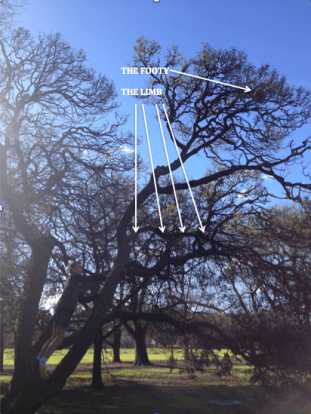 The Footy, The Tree and The Limb