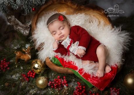 nyfødtfoto, julekortbilde, julekortfotografering,julepynt