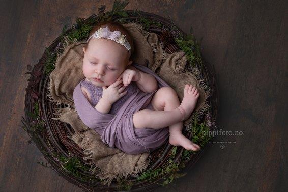 nyfødtfotografering-babyfotografering-Oslo
