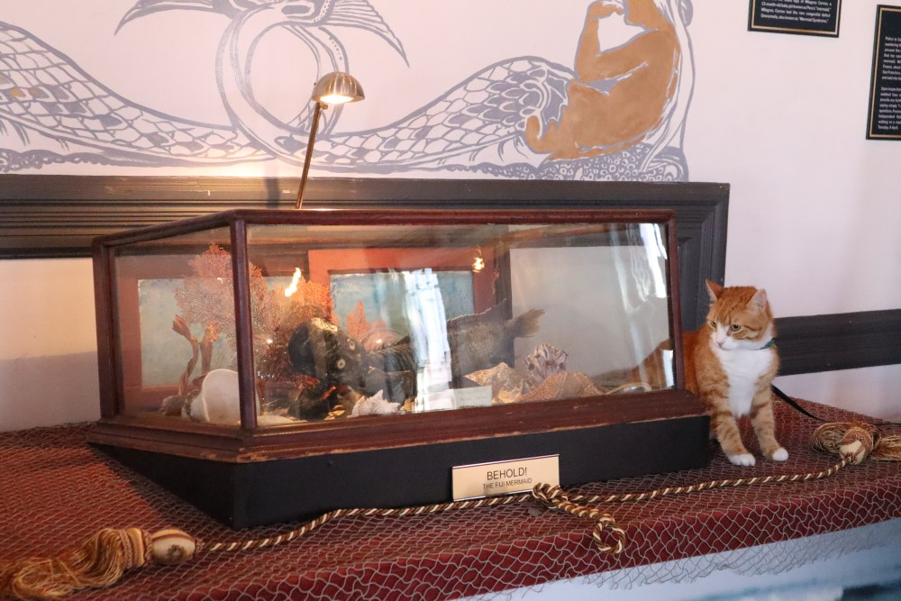 Pip the Beach Cat takes a closer look at the Feejee mermaid that P.T. Barnum popularized in mermaid culture and people paid money to see