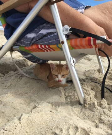 4. pip under beach chair mom