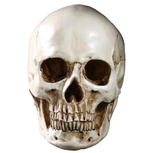 Realistic Skull Decor