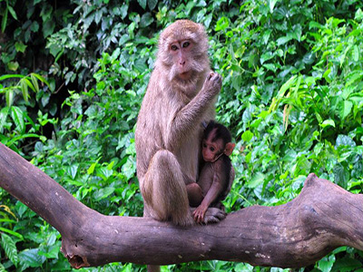 monkey-suwankhuha-temple