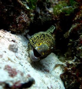 eel-close