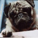 Profile picture of Pashjn