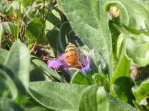 A Very Busy Bee