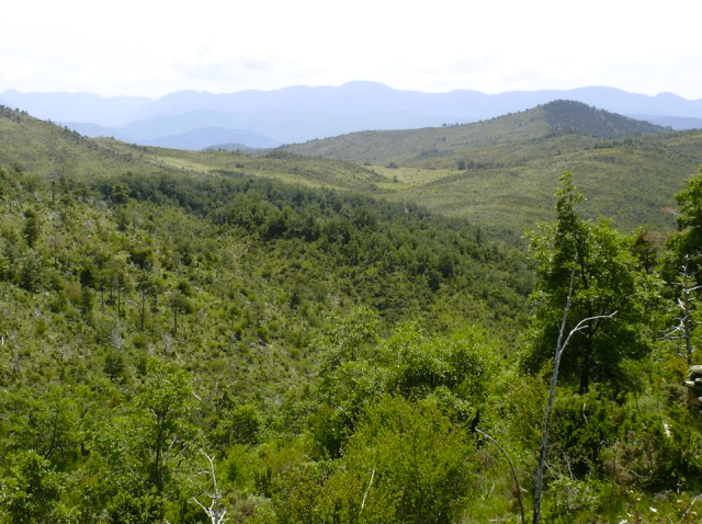 Bosque Paisaje Protegido San Juan de la Peña