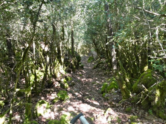 Bosque gnomos