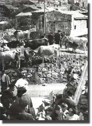 Feria de ganado de Biescas a principios del s.XX