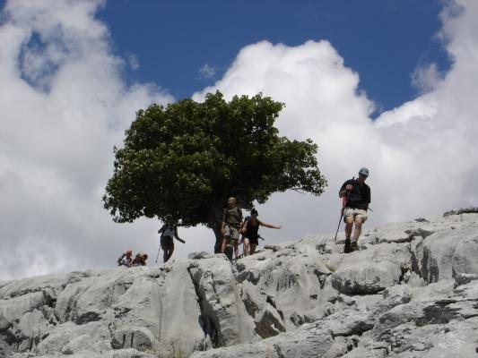 árbol característico cercano a la cumbre
