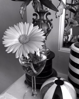 black and white daisy 3