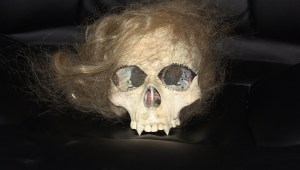 "Movie prop - part of the Delores skull from ""Polish Vampire in Burbank"" (1983)"