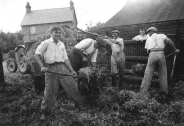 1950s  The cattle yard of Elm Tree Farm was often knee deep in dung. The work gang filled the cart and the dung was taken to be spread on the potato fields. L-R: Ken Walker, Tom Burton, Phil Walker, Joyce Walker, and Johnny Kingsley. In the background is the house on Royal Oak Lane where Ken was born. The cattle yard is where numbers 5, 7and 9, Hambridge Way were built in the 1980s.