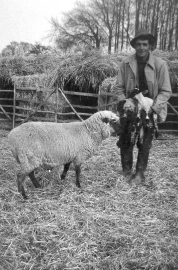 Pat Collins was the shepherd at Highdown