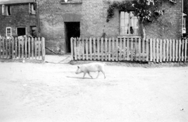 Pigs were always running round the village.