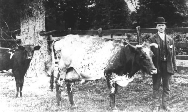 Bob Males did occasional work at Walnut Tree Farm