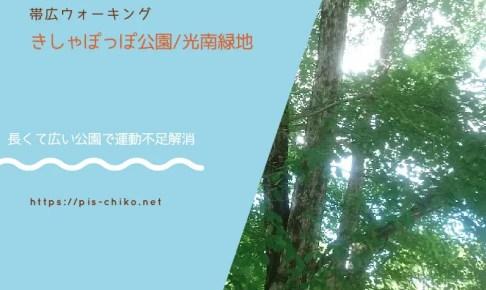 公園で撮影した白樺の木が涼しげな画像
