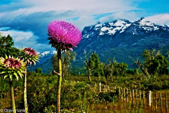patagonia_OL