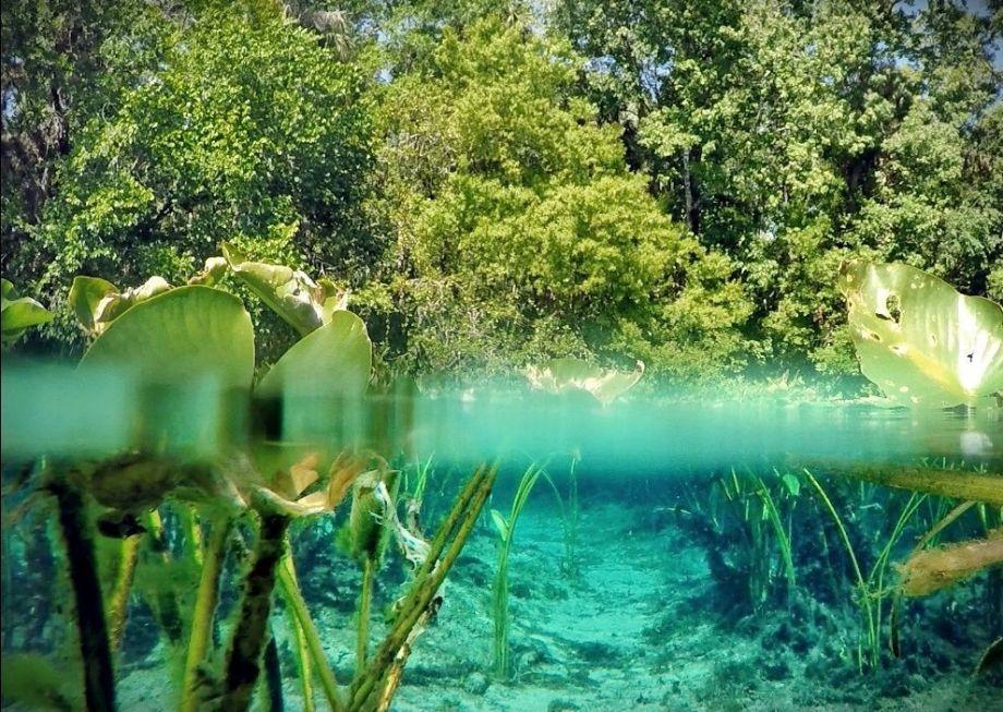 Cristalino manantial Alexander Springs