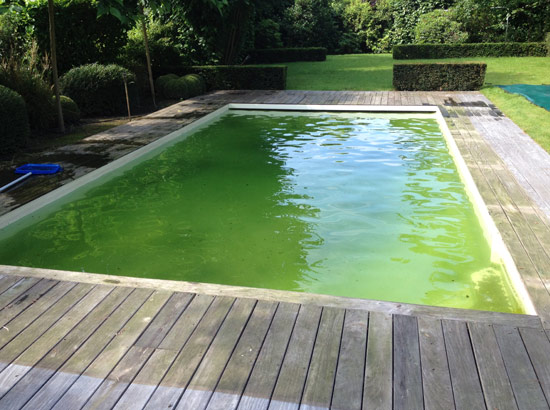 Entretien de piscine  Croix  Rcuprer une eau transparente