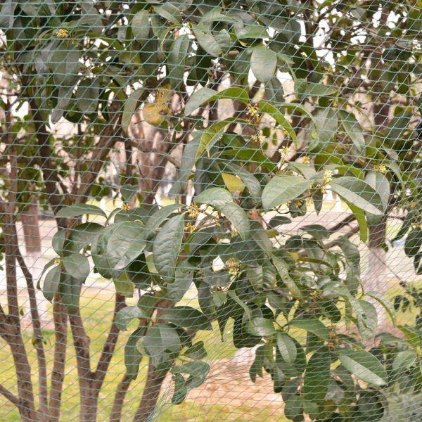 Plase de protecție împotriva păsărilor, 5 buc, 4 x 5 m, PE