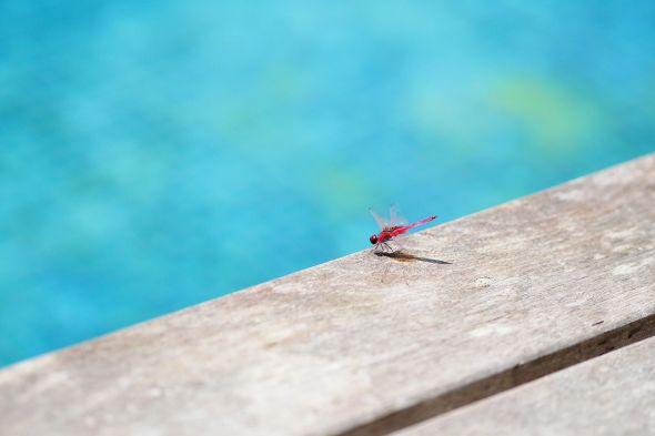 ¿Cómo eliminar los bichos de mi piscina?