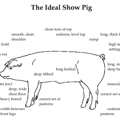 4 H Pig Diagram Microphone Wiring Diagrams Bacon Now Beef Later Kenny Gajewski Discusses His Ideal