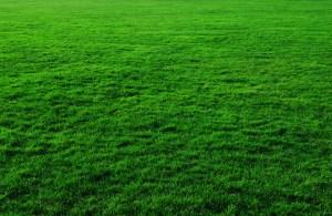 芝生 フリー