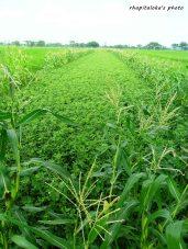 Green Farming