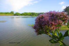 bunga ditepi danau