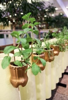 Suportes para plantas pintados com tinta dourada fosca.