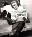 O chimpanzé que foi ao espaço e voltou, 1961.