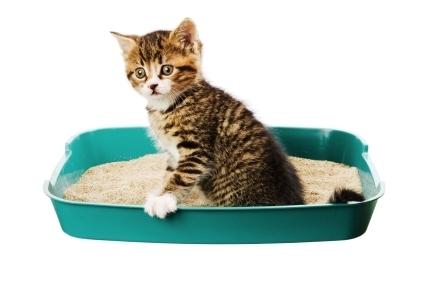 Что делать при запоре у кошки. Чем кормить кошку при запоре: список полезных продуктов