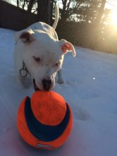 During the winter, Hope loves to play in the snow. It doesn't matter how much snow there is, she will plow through it and run around the backyard.