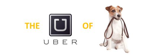 Uberofdogwalking