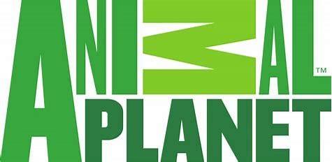 Animal Planet logo colors