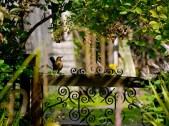 Menston, nature, birds, Summer