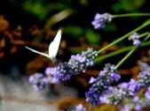 Summer flowers. nature