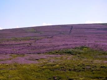 Otley &Ilkley in purple