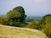 Autumn, Yorkshire, Season, Nature, Landscape