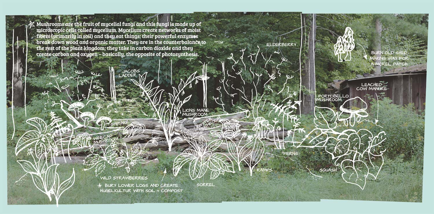 hight resolution of diagram of a mushroom and forest garden