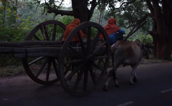 morning in odisha