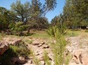 dry creek