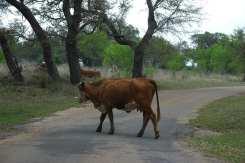 A Texas Roadblock