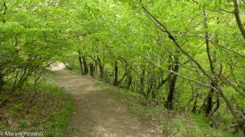 Hiking forest paths