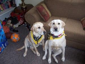 steeler-dogs