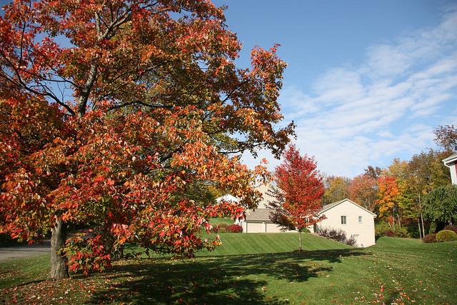 Richland Township