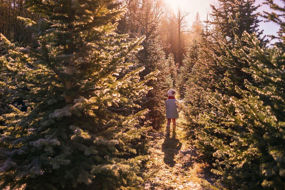 Pittsburgh Christmas Tree